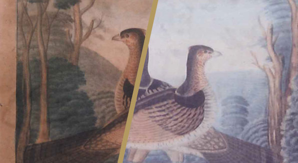 Restoration of Currier and Ives; Two Partridges, Circa 1850